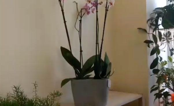 Пластиковый горшок орхидеи