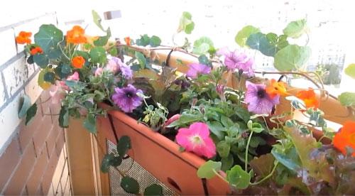 Превращение балкона в цветущий сад