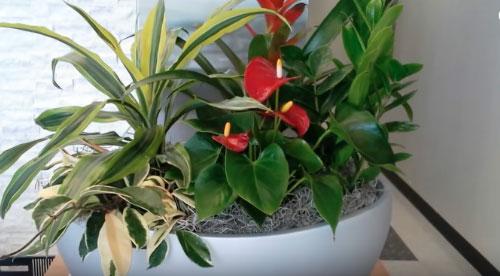 Керамическая посуда для растений