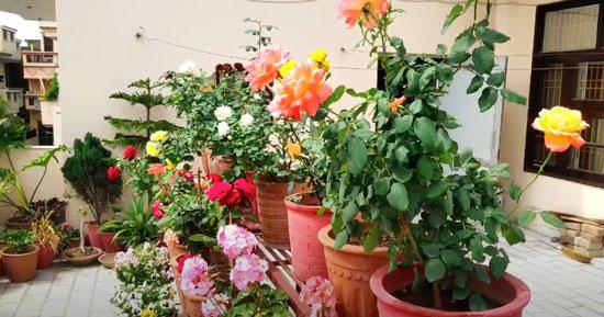 Живые цветы в керамических горшках